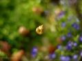 Tiny bells tinkle
