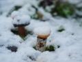 A snowy fairy garden!