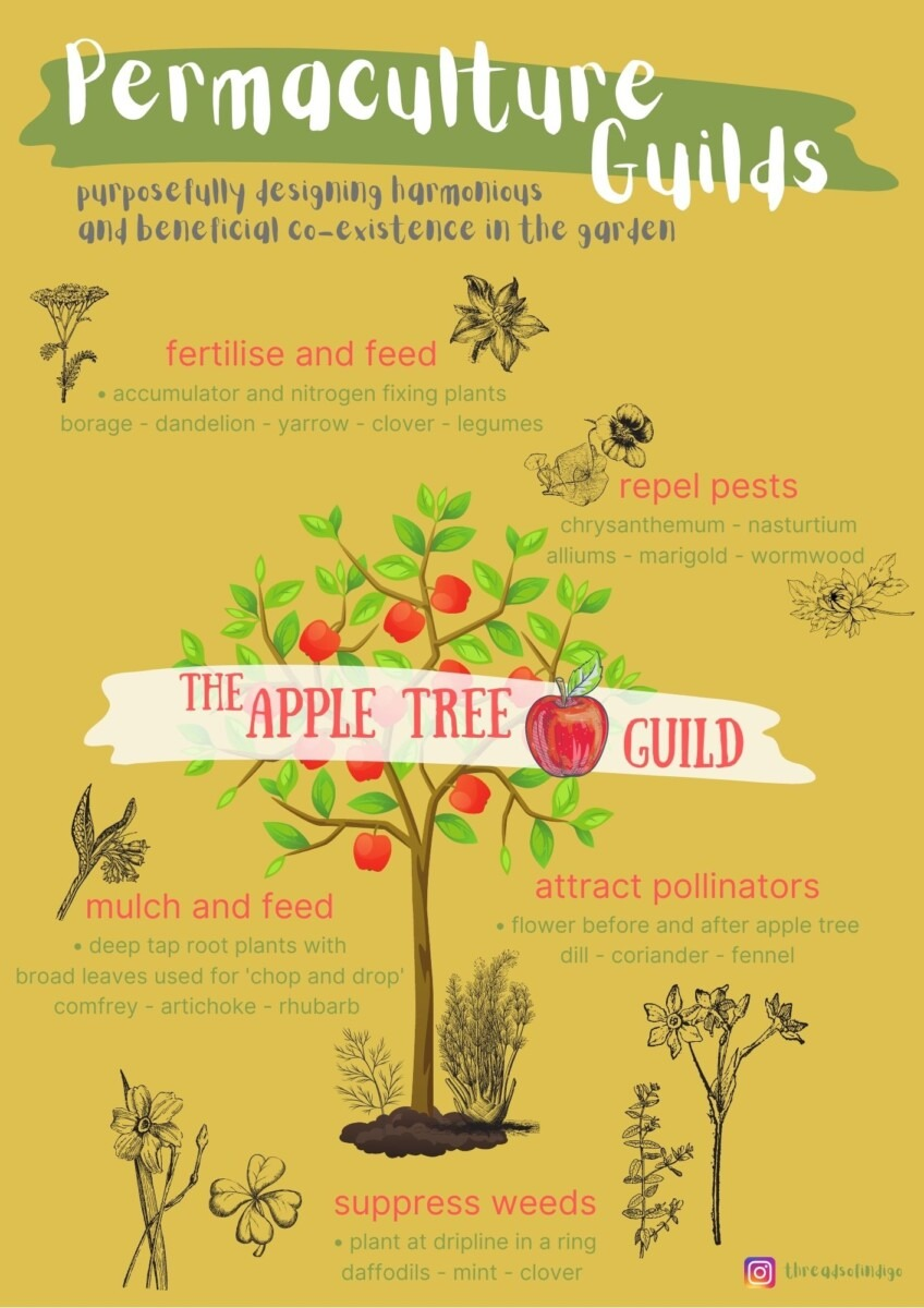 Apple Tree Guild - Permaculture