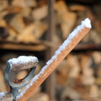 snowbart 50