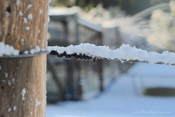 snowbart 65