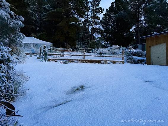 snowbart 77